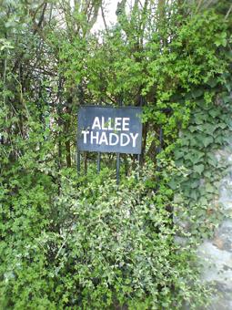 Thaddy